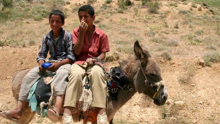 ロバにのるカシュカイ族の少年たち
